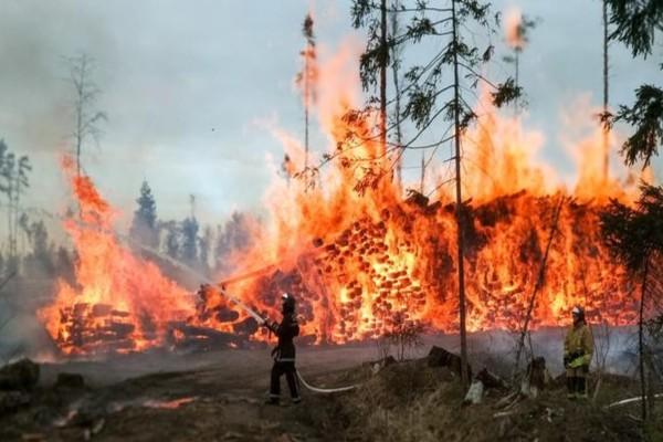 Φωτιά σε δασική έκταση στις Σπέτσες