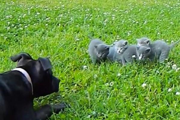 Ένας σκύλος φόβισε αυτά τα 4 γατάκια... Η συνέχεια είναι ανατρεπτική - Δεν πάει το μυαλό σας