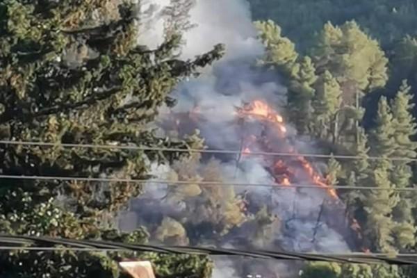 Ηλεία: Νέα φωτιά στην Ανδρίτσαινα