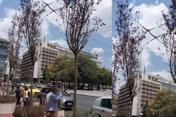 Αθήνα: Τα δέντρα στον Μεγάλο Περίπατο έχουν ήδη ξεραθεί