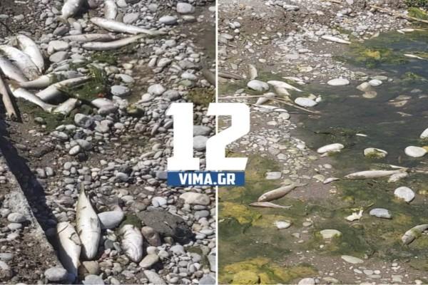 Τραγική εικόνα: Δεκάδες ψάρια ξεβράστηκαν νεκρά σε ποταμό στη Ρόδο