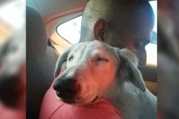 Άστεγος σκύλος χαλαρώνει στον ωμό ενός άνδρα - Ο λόγος που το κάνει θα σας συγκλονίσει