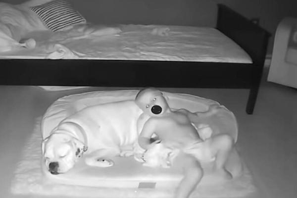 23 μηνών αγοράκι έφυγε από το κρεβάτι: Αυτό που το κατέγραψε η κάμερα να κάνει με τον σκύλο δεν το χωράει νους