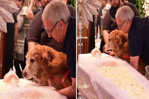 Σκυλάκι κλαίει σπαρακτικά με λυγμούς πάνω από το φέρετρο του αφεντικού του και ραγίζει καρδιές
