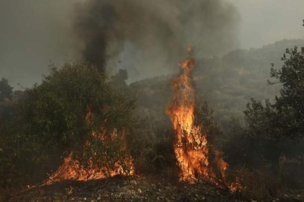 Φωτιά σε δασική έκταση στο Σουφλί Έβρου