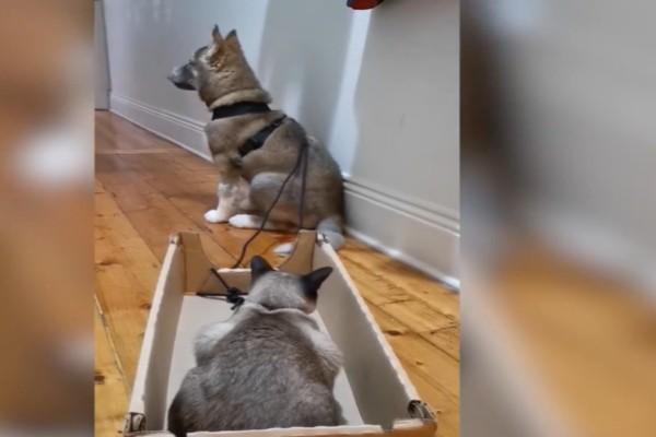 Αυτό το σκυλάκι κρατά στο λαιμό του το σχοινί και η γάτα βρίσκεται στο κουτί - Αυτό που συμβαίνει στη συνέχεια...