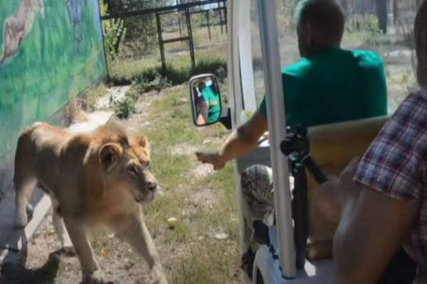 Έκαναν βόλτα στο ζωολογικό κήπο όταν ξαφνικά εμφανίστηκε ένα λιοντάρι και...