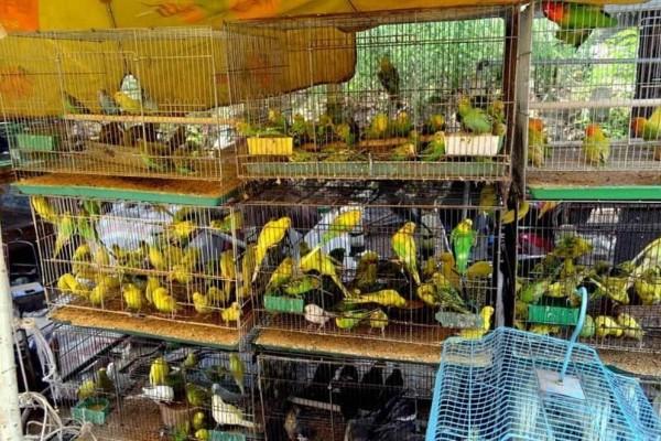 Μπαίνει ένας τύπος σε ένα Pet Shop: Το ανέκδοτο της ημέρας (11/09)