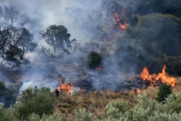 Φωτιά στη Φθιώτιδα - Συνδρομή εναέριων μέσων (photo)