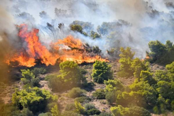 Πύρινη λαίλαπα στην Ανάβυσσο: Φόβοι για αναζοπυρώσεις - Συναγερμός στην Πυροσβεστική