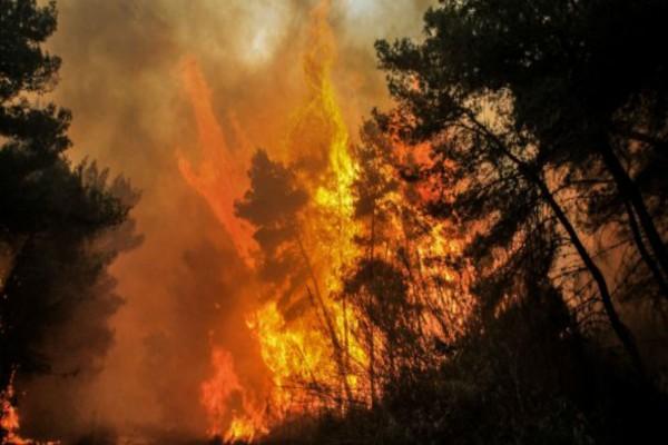 Ενεργά μέτωπα φωτιάς σε Ναύπακτο και Αλεξανδρούπολη
