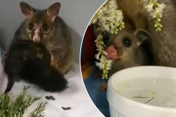 Αυτό το χαριτωμένο ζωάκι είχε εγκλωβιστεί σε ένα σωλήνα - Μόλις ξαναείδε τη μητέρα του...