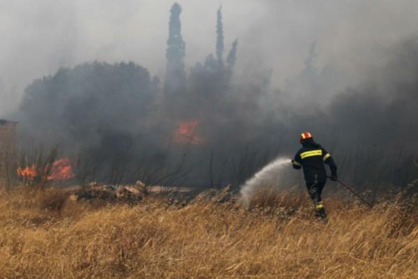 Φωτιά στη Ραφήνα: Εκκενώνονται σπίτια (Video)