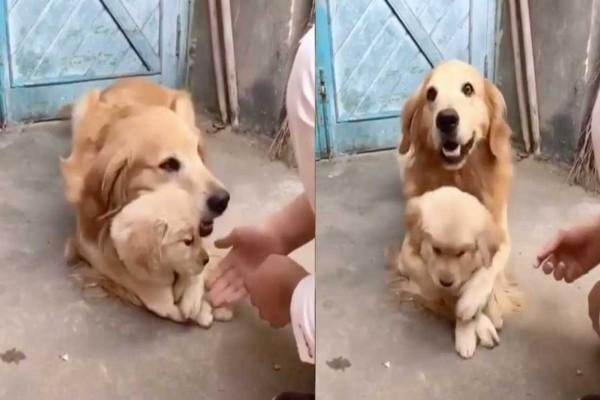 Μαμά σκυλίτσα προστατεύει το μωράκι της και συγκινεί - Δε θέλει να το ακουμπάνε γιατί...