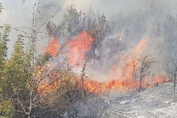 Συνεχίζεται η μάχη με τις φλόγες στον Έβρο - Ανεξέλεγκτη η φωτιά