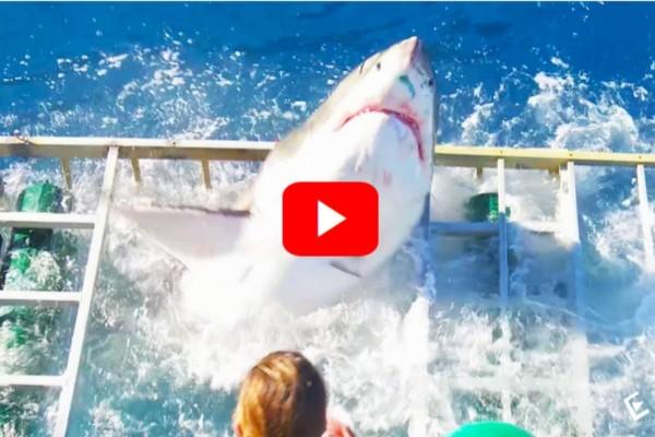 Δείτε το σοκαριστικό βίντεο όπου καρχαρίας επιτίθεται και σπάει κλουβί, ενώ ο δύτης βρίσκεται ακόμα μέσα!