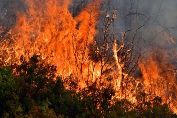 Φωτιά ξέσπασε στη Θίσβη Βοιωτίας