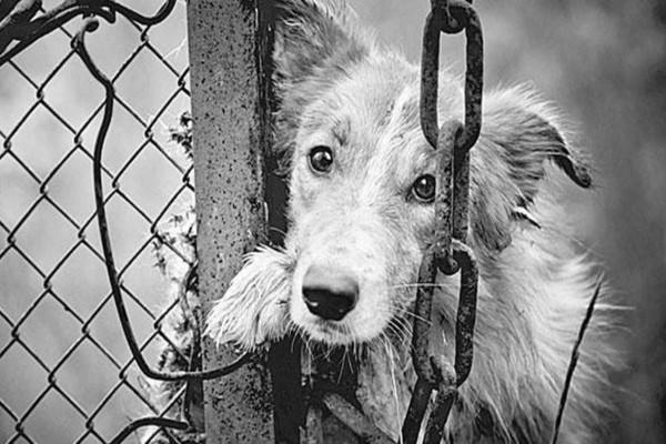 Άρειος Πάγος: Συλλήψεις και αυτόφωρο για αυτούς που κακοποιούν ζώα