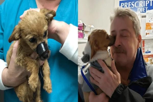 Ραγίζει καρδιές: Ένας σκύλος βρέθηκε με δεμένο στόμα - Ωστόσο ένας άνθρωπος τον βρήκε και...