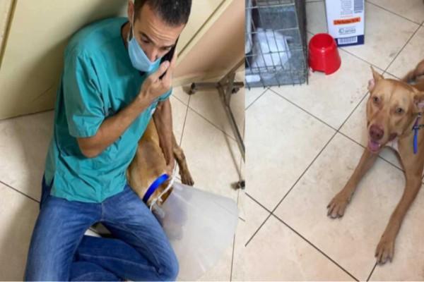 Χανιά: Το κτήνος που βασάνισε το σκύλο… εμφανίστηκε και δε μετανιώνει
