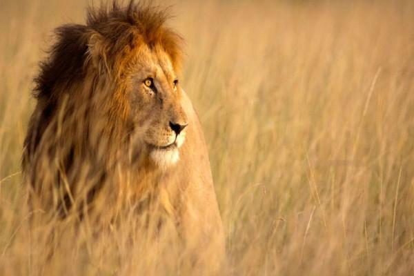 Αυτή η 39χρονη αγκαλιάζει ένα λιοντάρι- Η αντίδραση του θα σας σοκάρει