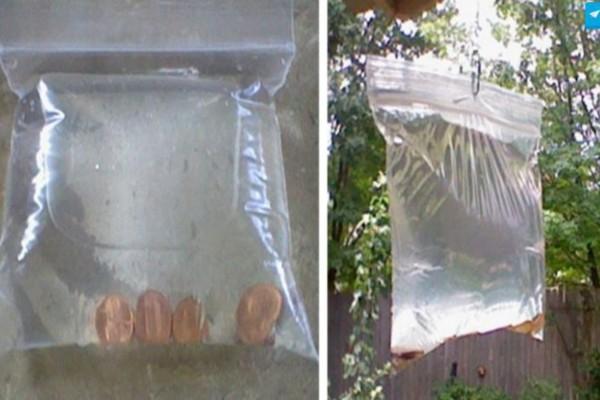 Δείτε πως μπορείτε να ξεφορτωθείτε τις μύγες απλά και γρήγορα - Έχετε ήδη τα απαραίτητα υλικά