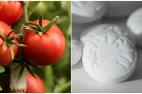 Φύτεψε ασπιρίνες μαζί με τις ντομάτες - Ο λόγος θα σας ενθουσιάσει