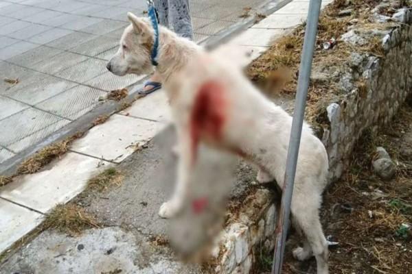 Συγκίνηση για το σκυλάκι που μαχαιρώθηκε από καθηγητή στη Νίκαια - Τι είπε η Κεραμέως