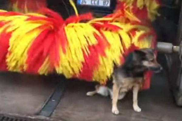 Σκύλος ανακαλύπτει τη βούρτσα του πλυντηρίου αυτοκινήτων: Το βίντεο με χιλιάδες προβολές στο διαδίκτυο!