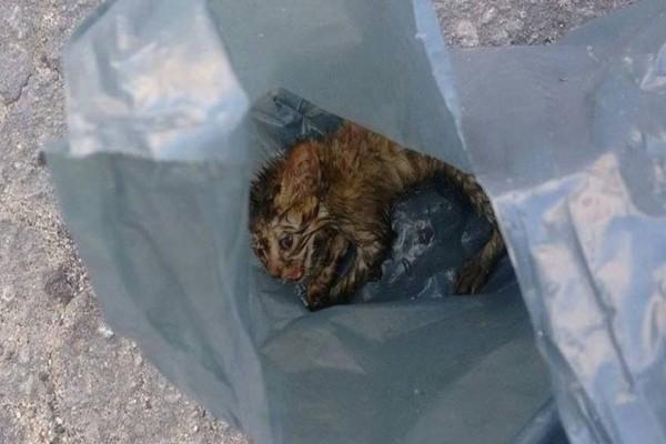 Μια δασκάλα βρήκε αυτό το γατάκι να κλαίει κλεισμένο σε μια σακούλα σκουπιδιών... Ραγίζει καρδιές