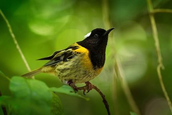 Αυτό το σπάνιο πουλί ξεχωρίζει παγκόσμια: Ο λόγος βρίσκεται στα…