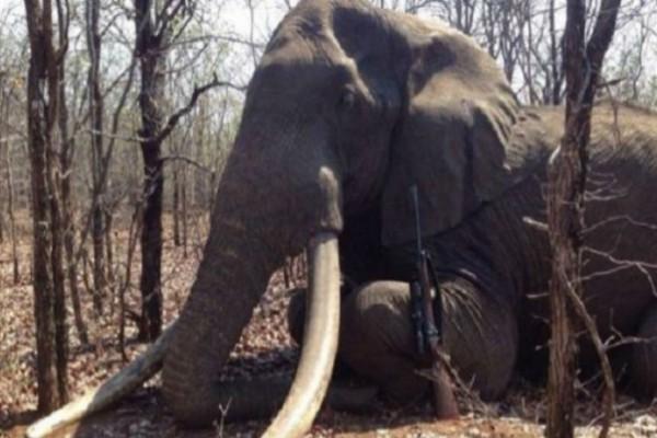 Πήγε για σαφάρι με σκοπό να δει το μεγαλύτερο ελέφαντα - Αυτό που ακολούθησε θα σας