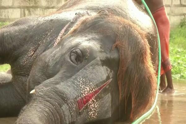 Ο ελέφαντας που εντυπωσιάζει με τις ικανότητες του στην... φυσαρμόνικα