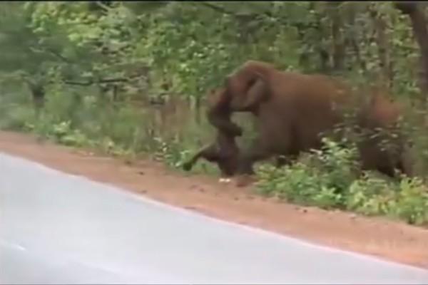 Το βίντεο που έχει συγκινήσει όλο το διαδίκτυο - Ελέφαντες κάνουν κηδεία στο μικρό ελεφαντάκι τους