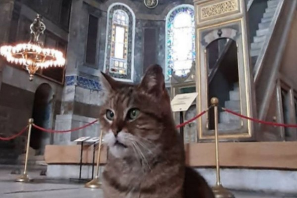 Πέθανε η γάτα-μασκότ της Αγιάς Σοφιάς