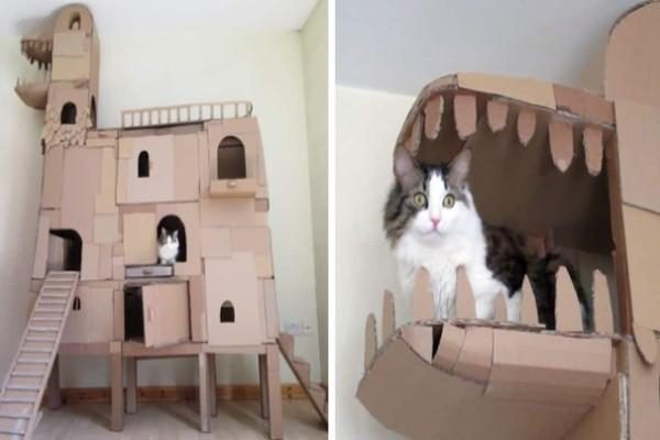 Δεν άντεχε να βλέπει τη γάτα του να βαριέται και της έφτιαξε έναν τεράστιο πύργο από χαρτόκουτα. Δείτε το εκπληκτικό αποτέλεσμα!
