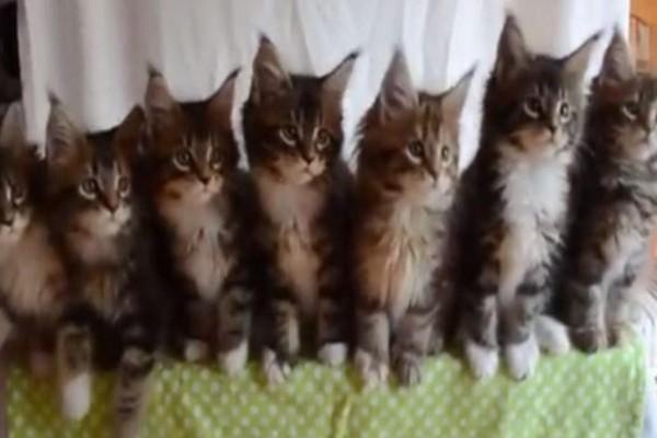 7 μικρά γατάκια αντιδρούν όταν... (video)