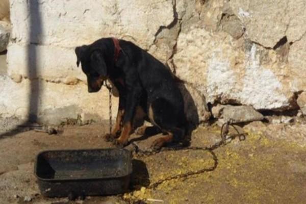 Νέα κτηνωδία στο Ηράκλειο - Άγνωστοι πυροβόλησαν αδέσποτο σκύλο