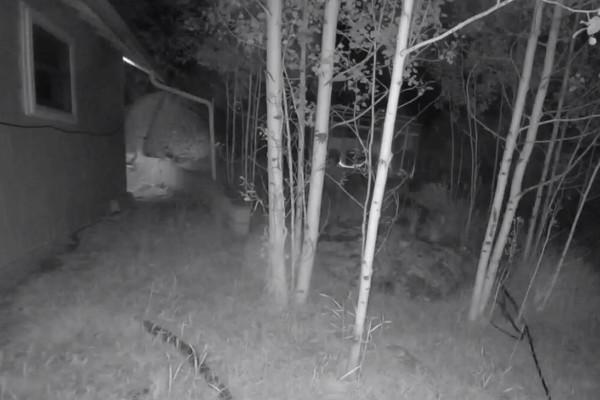 Τσέκαραν την κάμερα ασφαλείας στην αυλή - Δεν πίστευαν αυτό που είδαν (Video)
