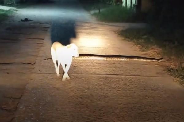 Σκύλος ήρθε σε επαφή με πύθωνα αλλά αυτό που έγινε μετά ήταν απίστευτο (βίντεο)