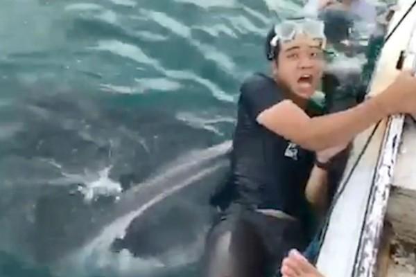 26χρονος επιχείρησε να βγάλει selfie με φαλαινοκαρχαρία! Λίγο αργότερα άρχισε να φωνάζει... (Video)