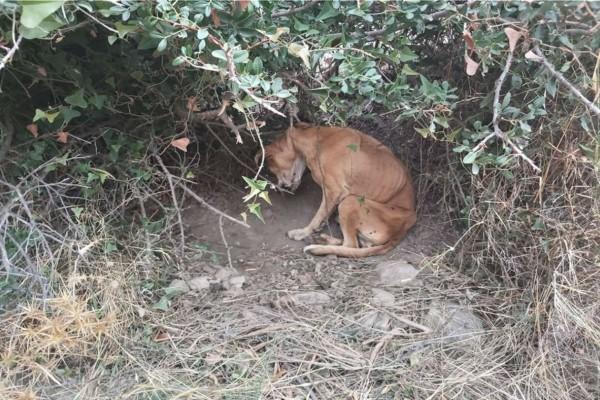 Κτηνωδία στην Κερατέα: Βρέθηκε σκελετωμένο και κρεμασμένο σκυλί