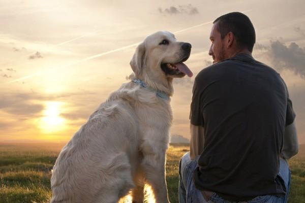 Νέα μελέτη αλλάζει τα δεδομένα για τους σκύλους - Ποια είναι η πραγματική τους σχέση με τον άνθρωπο