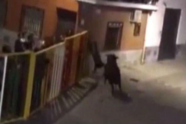 Πλησίασε έναν ταύρο για να βγάλει μια selfie - Αυτό που ακολούθησε δεν το χωράει ανθρώπινος νους