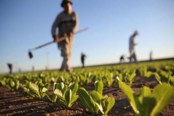 Βασική Ενίσχυση: Πότε θα πιστωθεί στους λογαριασμούς των αγροτών - Ποιοι θα την λάβουν πρώτοι