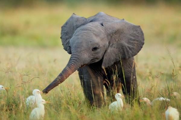 Ελεφαντάκι προσπαθούσε να αποφύγει περαστικούς - Αυτό που έκανε όμως θα σας κάνει να το λατρέψετε (pic)