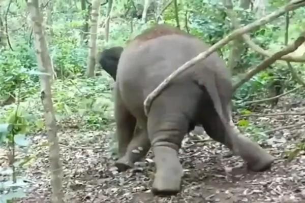 Ελεφαντάκι περνάει την καλύτερη στιγμή της ζωής του - Ο λόγος θα σας εκπλήξει (video)