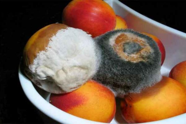 Το σούπερ κόλπο για να μην μουχλιάζουν τα φρούτα στο ψυγείο