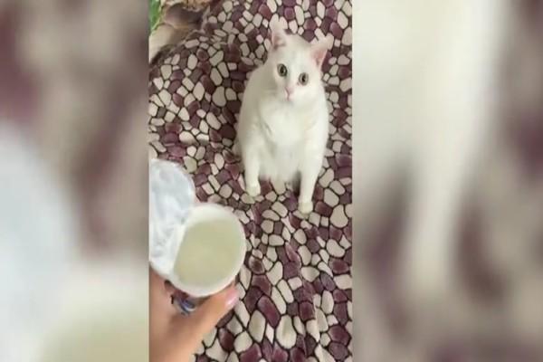 Τι γίνεται όταν μία γάτα έρχεται σε επαφή με ξινή τροφή - Δείτε τη συνέχεια και θα εκπλαγείτε (video)