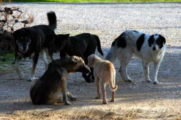 Κτηνωδία στην Πάτρα - Προσέγγιζε ζώα δήθεν για να ταΐσει και τα αποκεφάλιζε!